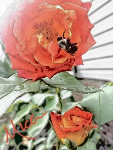 The Bee and the Rose all images © Mica Joy